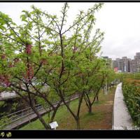 台北市休閒旅遊 景點 景點其他 樂康步道 照片