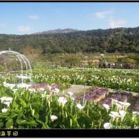 台北市休閒旅遊 景點 觀光花園 苗榜海芋田 照片
