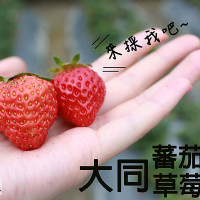 新竹市休閒旅遊 景點 觀光果園 大同番茄草莓園 照片