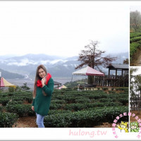 宜蘭縣休閒旅遊 景點 觀光茶園 玉蘭茶園 照片