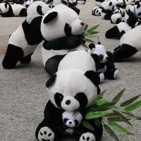 台中市休閒旅遊 購物娛樂 創意市集 益民一中商圈熊貓裝置藝術展 照片