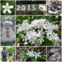 新竹縣休閒旅遊 景點 景點其他 仁和步道 照片