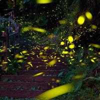 嘉義縣休閒旅遊 景點 森林遊樂區 圓潭生態園區 照片