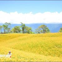 嘉義縣休閒旅遊 景點 觀光花園 梅山玉虛宮橫山屏休閒園區 照片