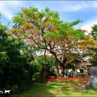 高雄市休閒旅遊 景點 景點其他 大湖番茄會社 照片