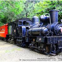 嘉義市休閒旅遊 景點 森林遊樂區 阿里山森林鐵路 照片