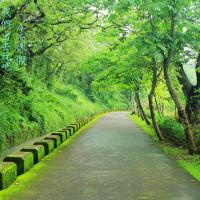 台中市休閒旅遊 景點 景點其他 永豐六分桐花步道 照片