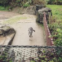 台北市休閒旅遊 景點 遊樂場 臺北市動物園 照片