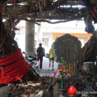 澎湖縣休閒旅遊 景點 古蹟寺廟 通樑古榕 照片