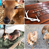 屏東縣休閒旅遊 住宿 民宿 鹿境Paradise Of Deer 照片
