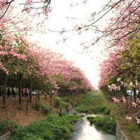 雲林縣休閒旅遊 景點 公園 雲林農博生態園區 照片