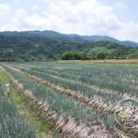宜蘭縣休閒旅遊 景點 觀光農場 農夫青蔥體驗農場 照片