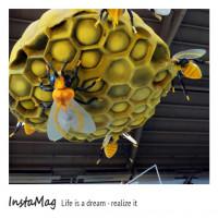 雲林縣休閒旅遊 景點 景點其他 雲林古坑蜜蜂故事館 照片