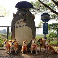 新竹縣休閒旅遊 景點 觀光農場 松湖休閒親子莊園 照片