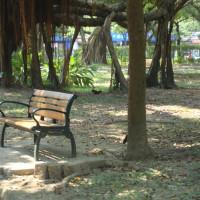 台北市休閒旅遊 景點 公園 大安森林公園 照片