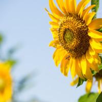 桃園市休閒旅遊 景點 觀光花園 溪海花卉園區 照片