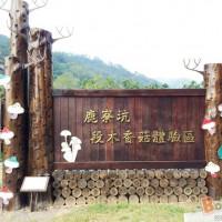 新竹縣休閒旅遊 景點 觀光農場 鹿寮坑段木香菇體驗區 照片