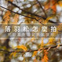 台中市休閒旅遊 景點 景點其他 霧峰落羽松 照片