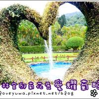 台北市休閒旅遊 景點 公園 2014士林官邸菊展~♥愛耀菊時♥ 照片