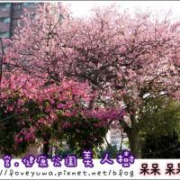 台中市休閒旅遊 景點 景點其他 尊天宮美人櫻 照片