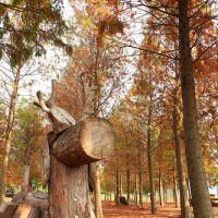 南投縣休閒旅遊 景點 觀光林園 南投市139縣道落羽松 照片