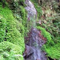 高雄市休閒旅遊 景點 森林遊樂區 茂林情人谷 照片