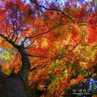 南投縣休閒旅遊 景點 景點其他 108K楓之谷 照片