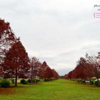 宜蘭縣休閒旅遊 景點 景點其他 宜蘭三星 落羽松 照片