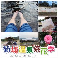 新竹縣休閒旅遊 景點 景點其他 新埔溫泉茶花季 照片