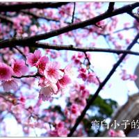 台北市休閒旅遊 景點 古蹟寺廟 善光寺 照片