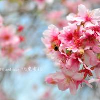 台中市休閒旅遊 景點 觀光花園 員農櫻花種苗場 照片