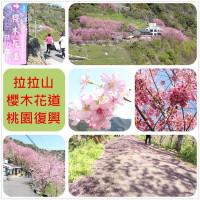 桃園市休閒旅遊 景點 森林遊樂區 櫻木花道 照片