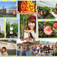 新竹縣休閒旅遊 景點 觀光農場 關西高平蕃茄觀光農場 照片