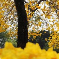 台中市休閒旅遊 景點 公園 豐富公園 照片