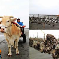 彰化縣休閒旅遊 景點 景點其他 番挖海牛車隊 照片