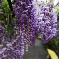 台中市休閒旅遊 景點 觀光花園 詠惠生技有限公司 照片