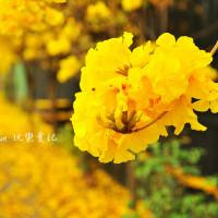 南投縣休閒旅遊 景點 觀光花園 樸提蘭園 照片