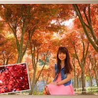 台北市休閒旅遊 景點 景點其他 秘境楓葉林 照片