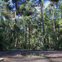 台北市休閒旅遊 景點 景點其他 陽明山竹子湖黑森林 照片