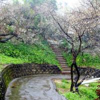 嘉義縣休閒旅遊 景點 公園 梅山公園 照片