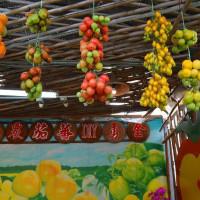 新竹縣休閒旅遊 景點 觀光農場 金勇番茄DIY休閒農場 照片