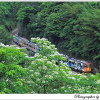 新北市休閒旅遊 景點 景點其他 桐花火車 照片