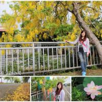 台南市休閒旅遊 景點 景點其他 白河阿勃勒大道 照片