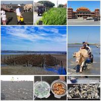 彰化縣休閒旅遊 景點 海邊港口 海牛驛站 照片