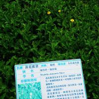 紫色微笑在大安藥園休閒農場 pic_id=1473756