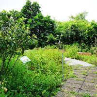 紫色微笑在大安藥園休閒農場 pic_id=1473758