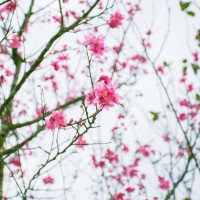 宜蘭縣休閒旅遊 景點 公園 崙埤河濱公園 照片