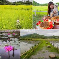 花蓮縣美食 餐廳 咖啡、茶 咖啡館 發現六階鼻 照片