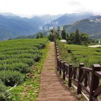 嘉義縣休閒旅遊 景點 觀光茶園 頂石棹步道群 照片