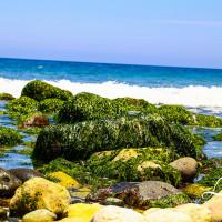 台東縣休閒旅遊 景點 海邊港口 成功海濱公園 照片